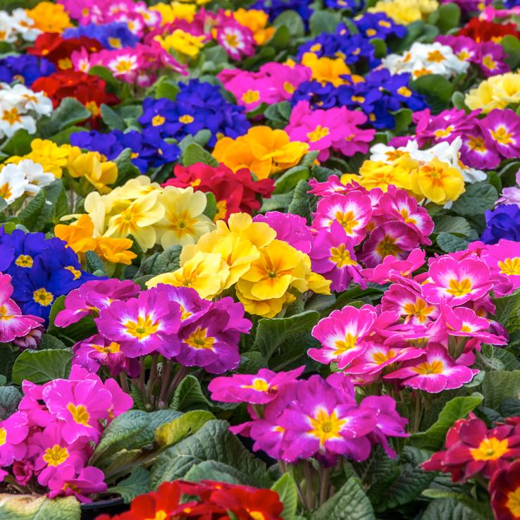 Cade Street Nursery flower selection